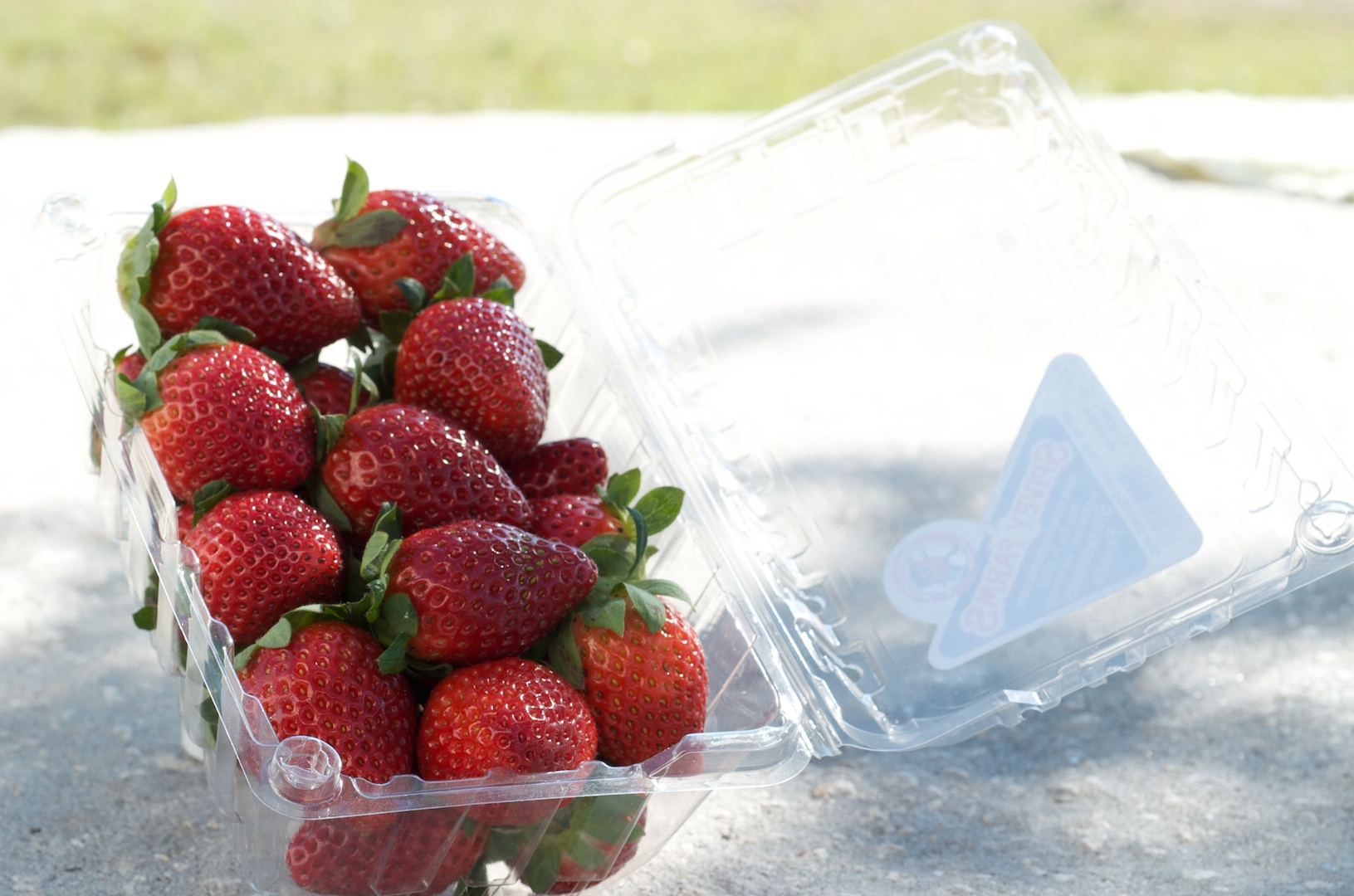 Container Strawberries Pictures
