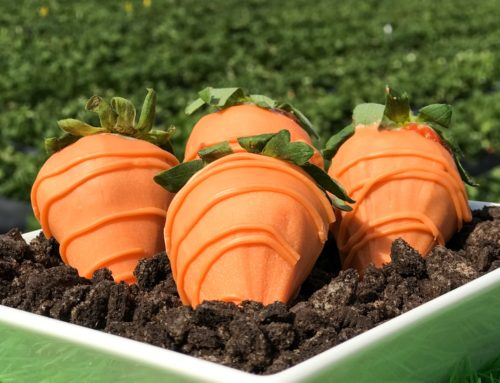 Chocolate Covered Carrot Strawberries